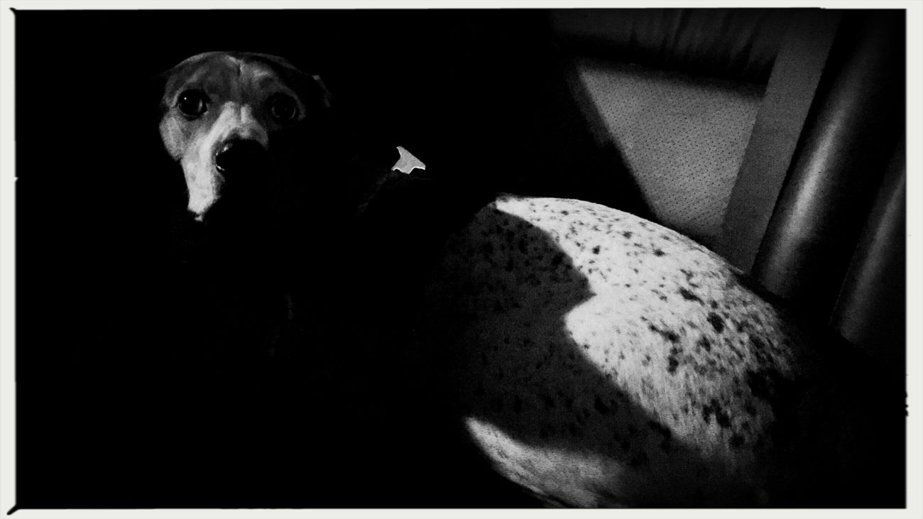 Backseat driver. Domestic Animals One Animal Pets Animal Themes Mammal Dog Sitting Indoors  Black Background Home Interior One Person Close-up Night People Shootermag_usa EyeEm Best Shots Documentary Photojournalism Reportage Canine 16x9 Widescreen
