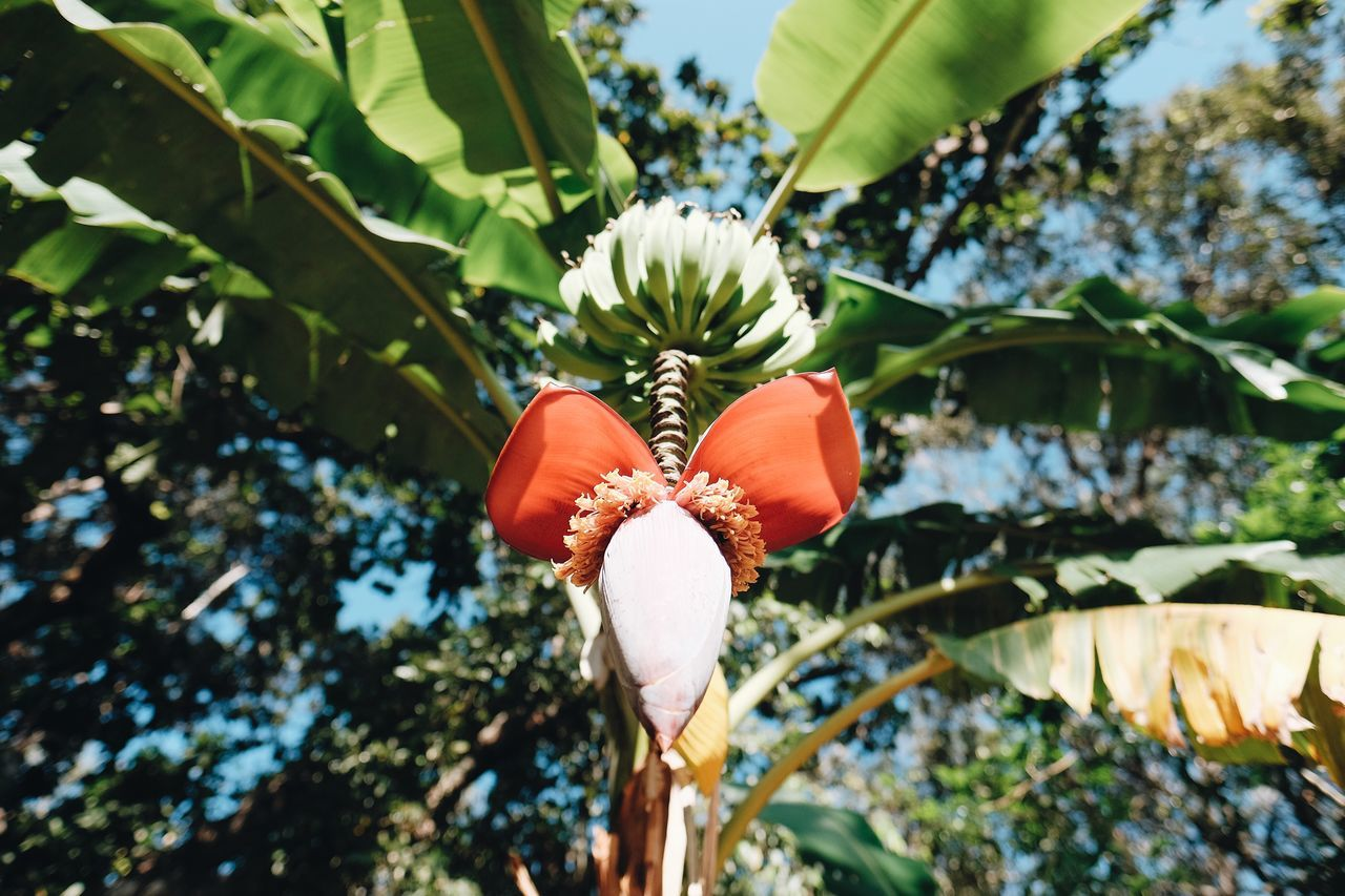 Growth Nature Beauty In Nature Leaf Flower Plant No People Freshness Green Color Close-up Blooming Outdoors Flower Head Fragility Day Tree Banana