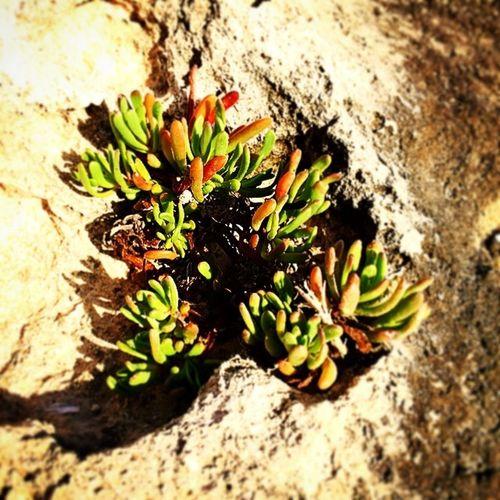 Panorama Acqua Mare Spiaggia Sole Amici Lampedusa  Roccia Piantenellariccia