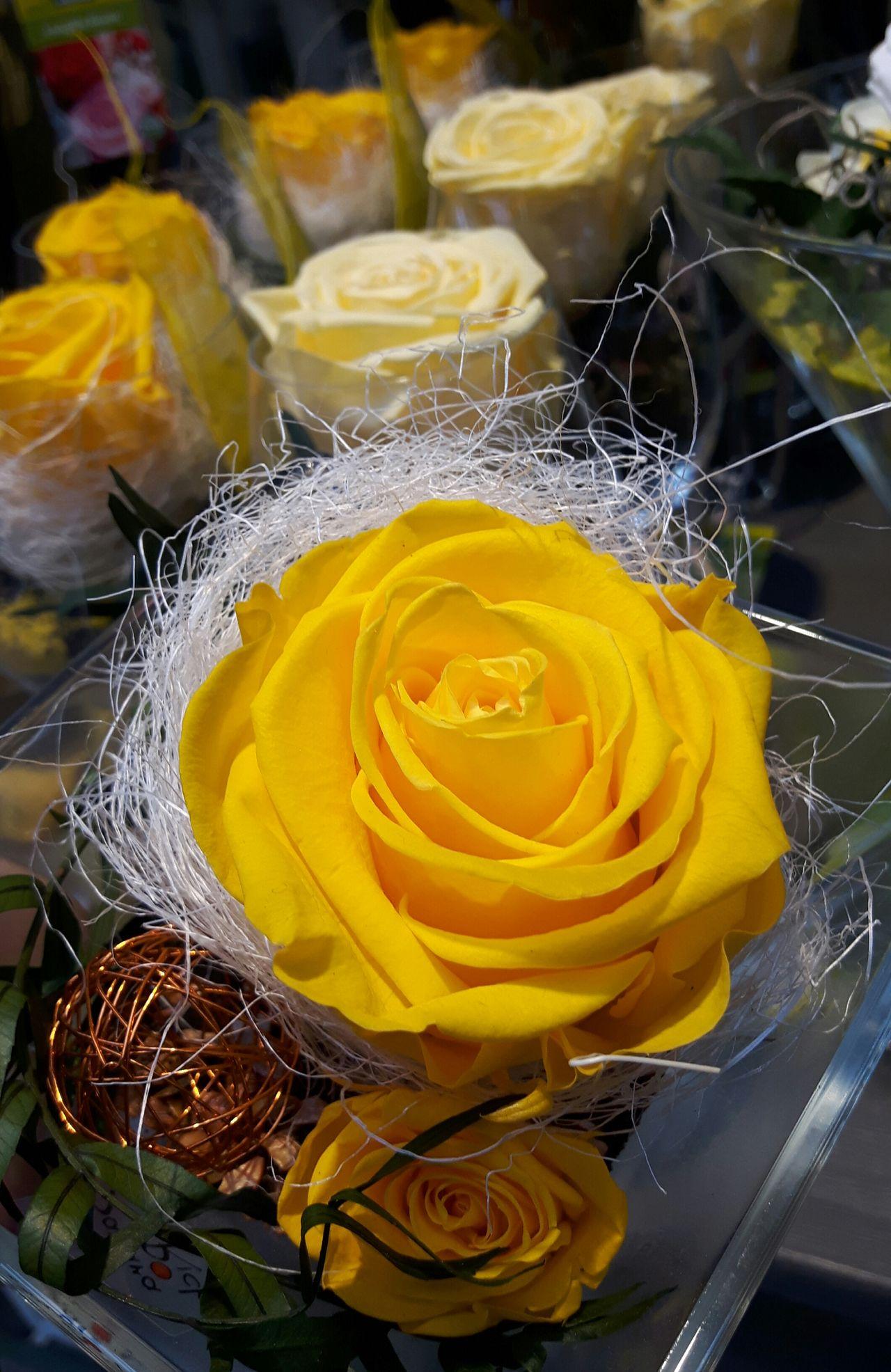 Gelbe Rosen Yellow EyeEm Best Shots - Flowers Roses Flowers  Roses🌹 Rose🌹 Flowers_collection Flowerphotography Flower Photography Flower Head Flower Plant Day Beliebte Fotos