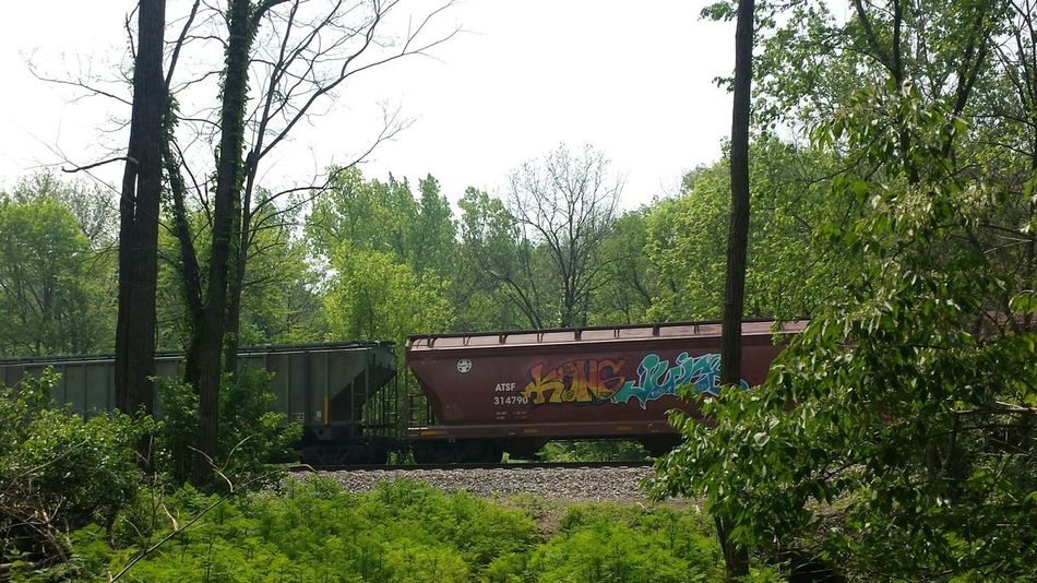 Tree Growth Nature Train_of_our_world No People Forest Communication Beauty In Nature Outdoors Backgrounds Adapted To The City Abstract Art Graffitti