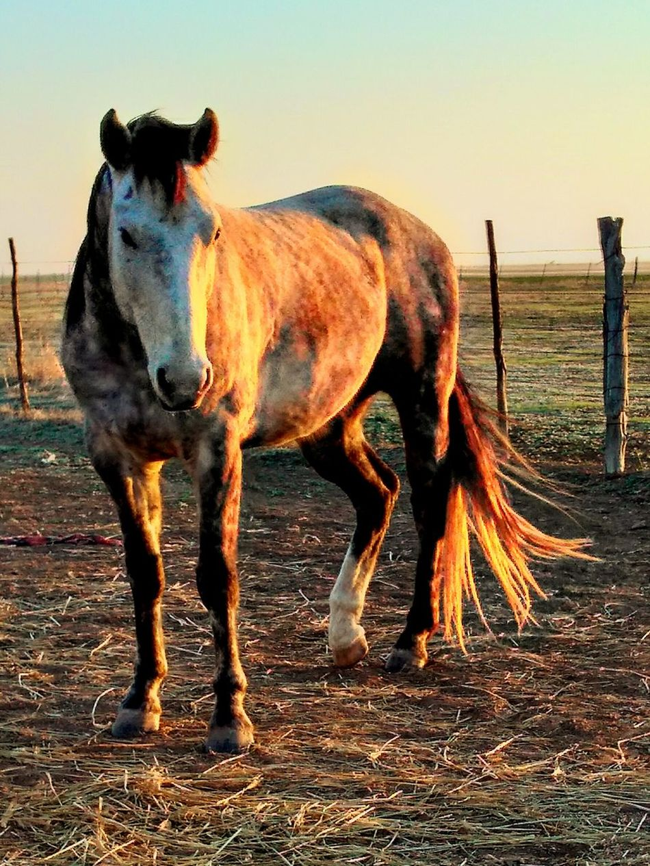 Ranch horses Horse Domestic Animals Mammal Animal Themes Outdoors Sky No People Nature Beauty In Nature Day Silhouette Working Animal Pasture, Paddock, Grassland, Pastureland Livestock Mane Country Living Ranch Farm Cowboy Ranch Life Country Life Barn Stable Grass Field