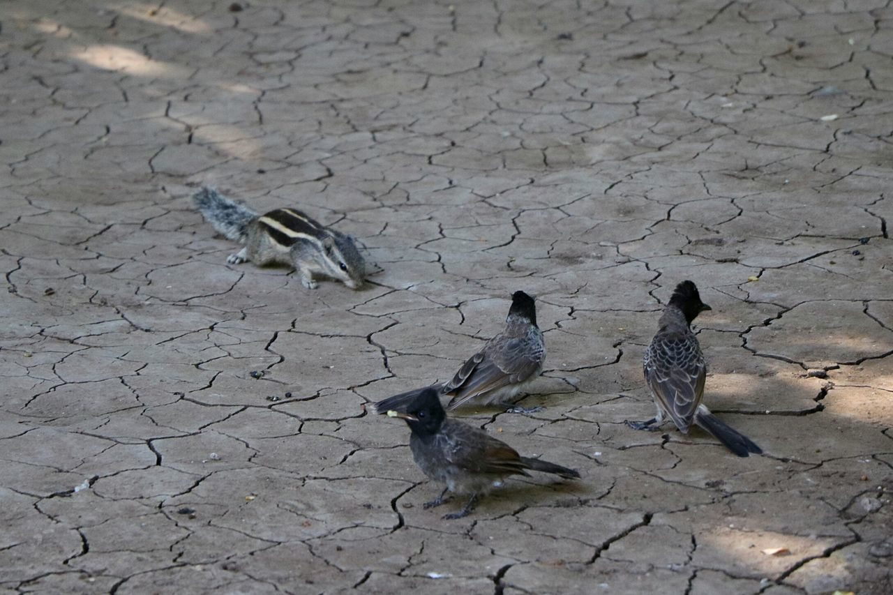 Chance Encounters Birds And Squirel Fighter Birds_collection Squirell Squirell Eating Birds Of EyeEm  Enjoy The New Normal Ajantacaves Ajanta Caves Ajanta Caves. outside