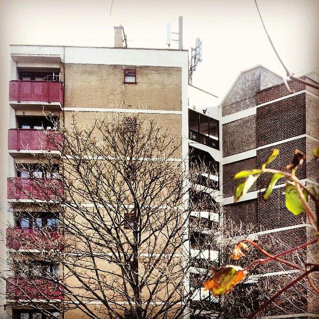 Selondon Selondonforever Silwood Silwoodestate silwoodtriangle silwoodregeneration highrise housingestate housingestates balconies balconiesonbalconies balconiesrule brick bricks stairwell stairwells stairwellporn