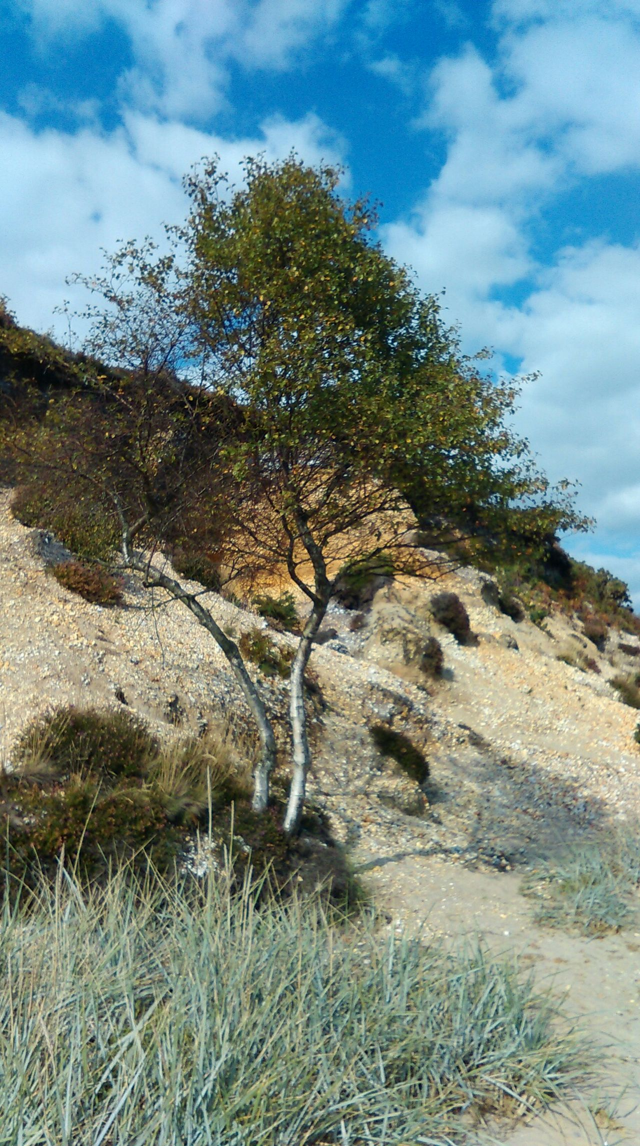 Birch beach tree Eeyem Nature Lover On A Walk Huggingatree  Beach Beautiful Nature