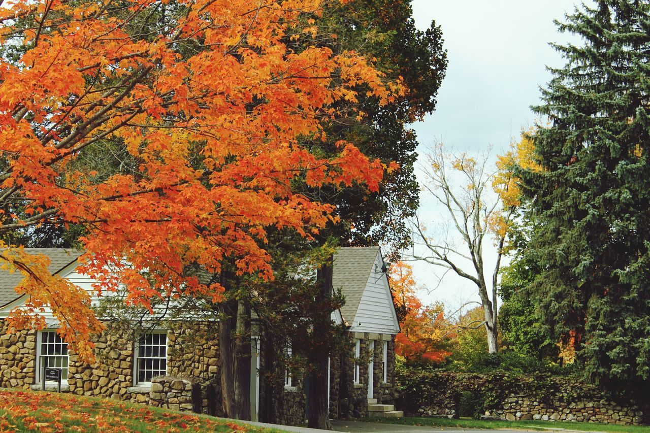 autumn, tree, orange color, leaf, change, outdoors, building exterior, day, no people, architecture, built structure, nature, beauty in nature, tranquility, growth, sky