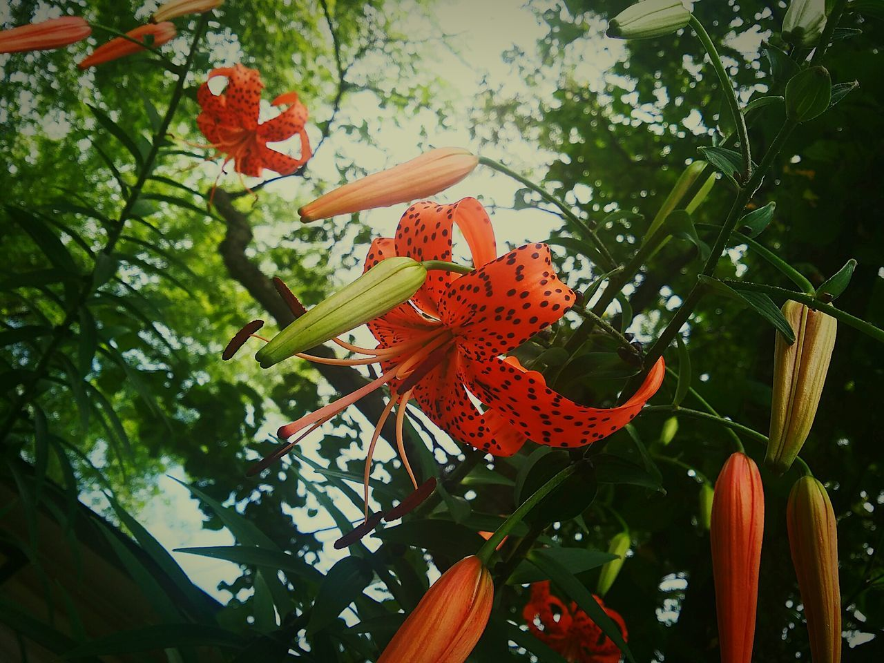 growth, beauty in nature, orange color, nature, leaf, flower, freshness, fragility, no people, plant, petal, day, flower head, outdoors, low angle view, blooming, close-up