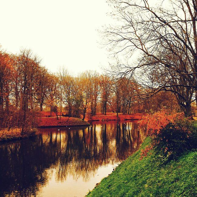 Autumn Autumn Colors Autumn Collection Autumn Trees Nature Nature_collection Nature On Your Doorstep Nature Photography Park Lake Poland Amazing Poland