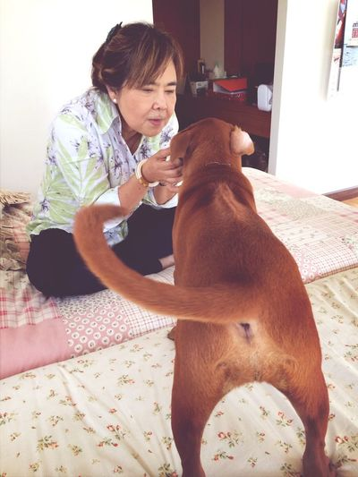 Our little girl Thai Dog