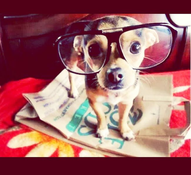 Doglover How Cute!! Check This Out Glasses