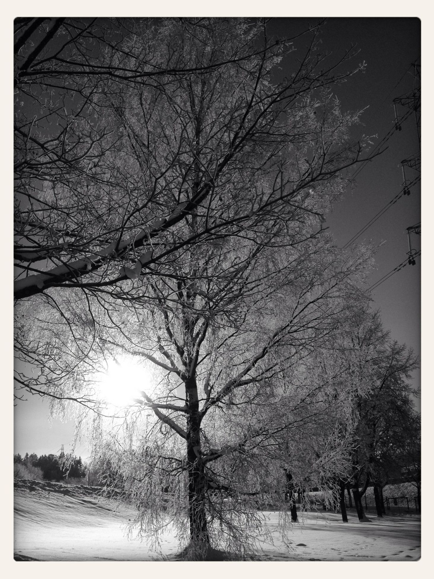 branch, bare tree, tree, tree trunk, outdoors, low angle view, nature, winter, season, cold temperature, no people, snow, tranquility, frozen, forest, cold, winter, cold temperature, weather, tranquility