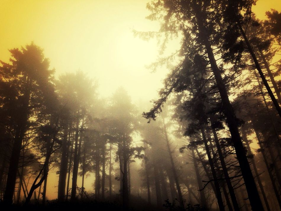 Look Up And Thrive In The Forest Through Trees Summer Haze