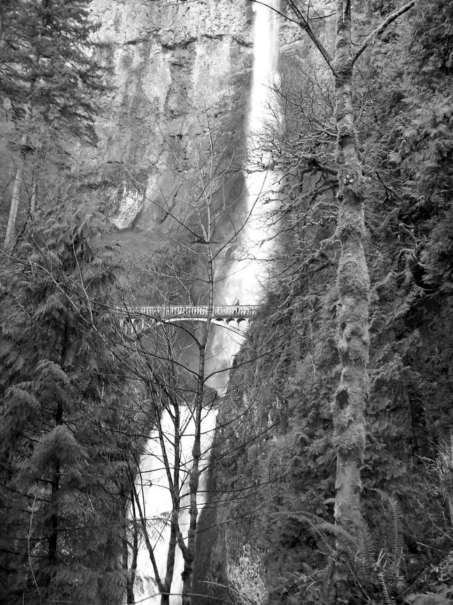 Bare Tree Black & White Black And White Blackandwhite Branch Bridge Forest Outdoors Snow Tree Waterfall Waterfall_collection Winter