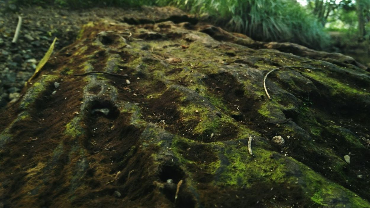 Moss Tree Trunk Forest Tree Growth Non-urban Scene Wilderness Outdoors Botany WoodLand AdamTurnerPhotography Log