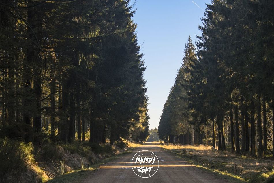 Tree Road The Way Forward No People Outdoors Nature Sky Beauty In Nature Day