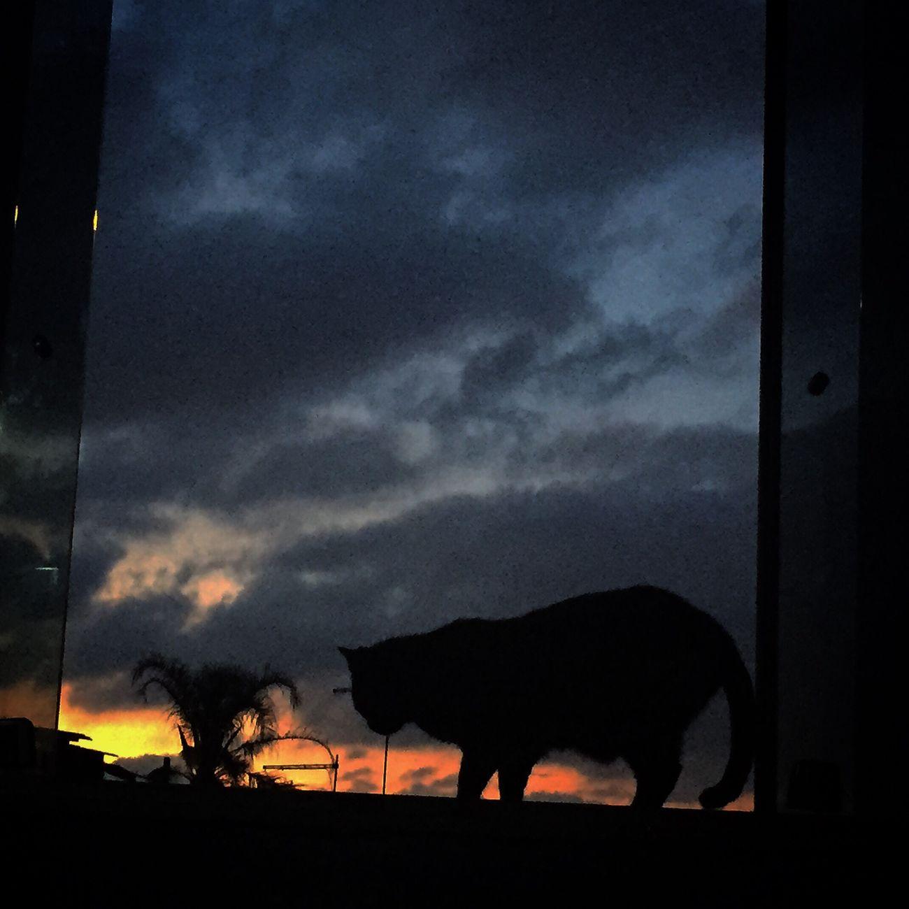 A gata recebendo o outono que entra por minha janela. Outono Auntumn Pordosol