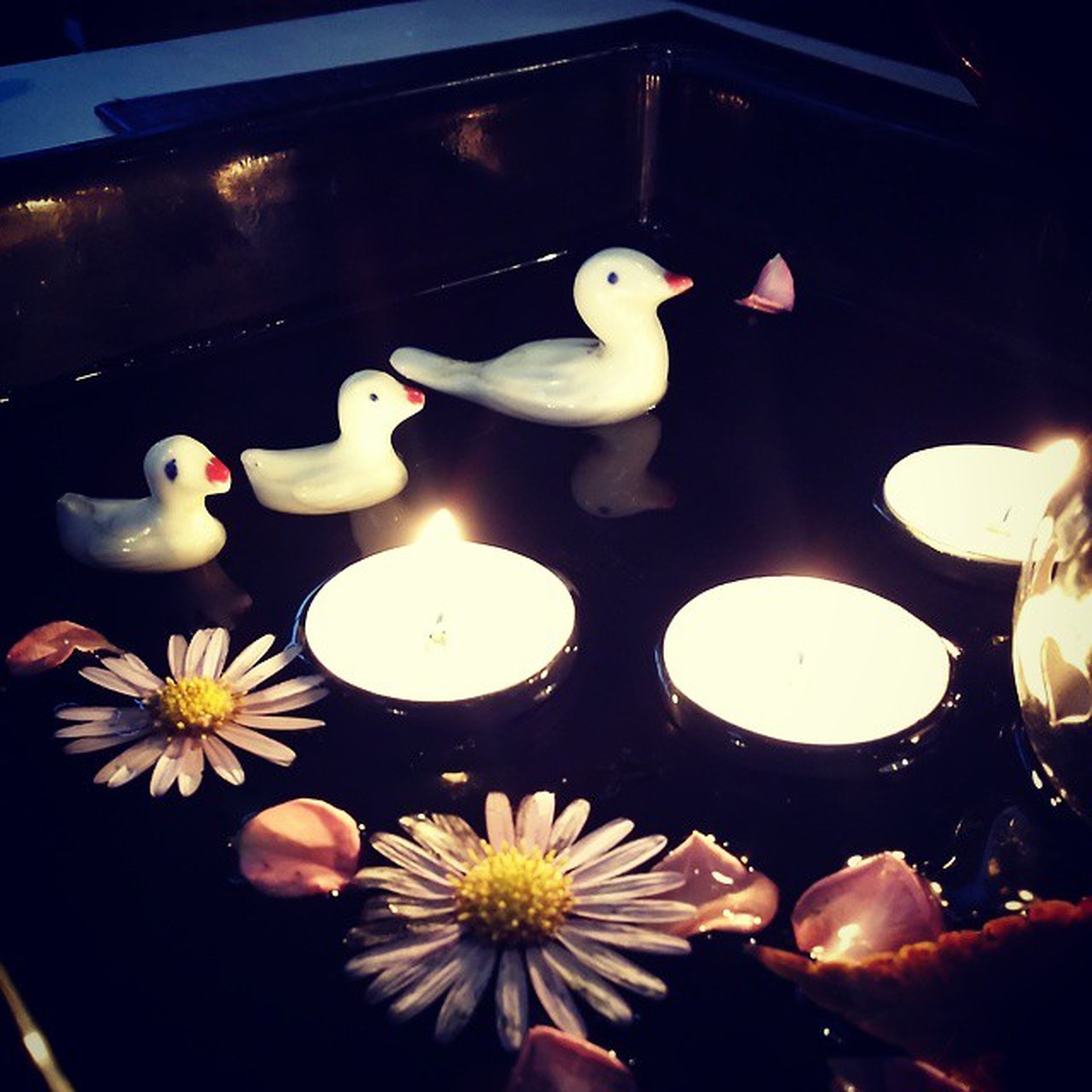 indoors, animal representation, white color, art and craft, variation, decoration, art, high angle view, illuminated, creativity, no people, human representation, flower, close-up, reflection, toy, large group of objects, night, abundance, animal themes