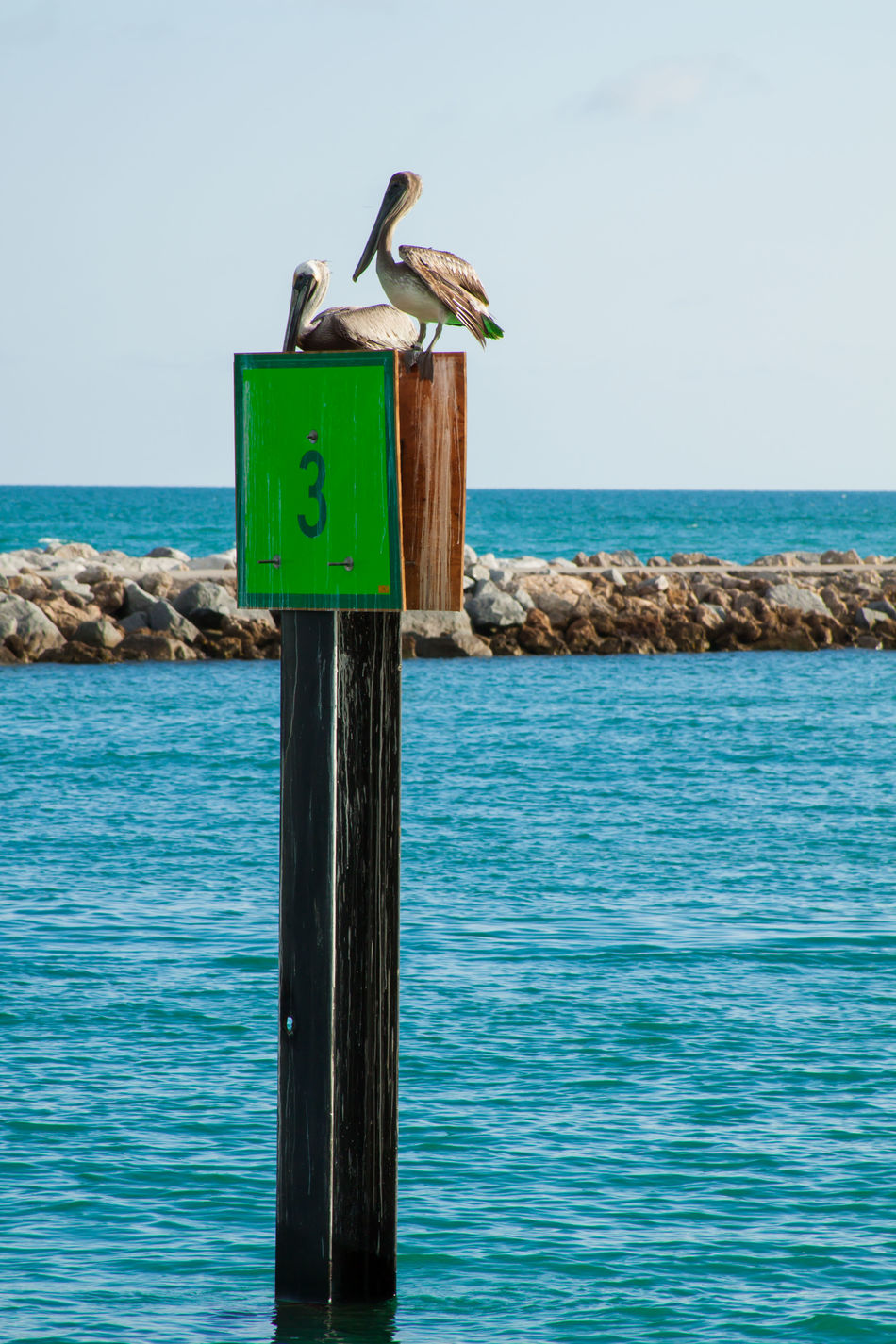 Animal Themes Animals In The Wild Beauty In Nature Bird Brown Pelicans Clear Sky Horizon Over Water Nature Outdoors Rocks And Water Scenics Sea Tranquil Scene Tranquility Water Wildlife Wooden Post