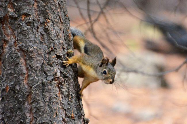 Phuket,Thailand Animal Squirrel A Lone Nature Tree