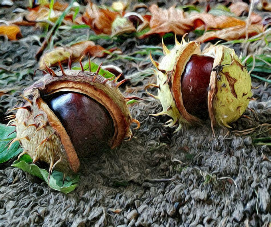 Chestnuts Autumn🍁🍁🍁 Nature In The Backyard Berlin Tempelhof Fine Art EyeEm Best Edits Still Life Maximum Closeness