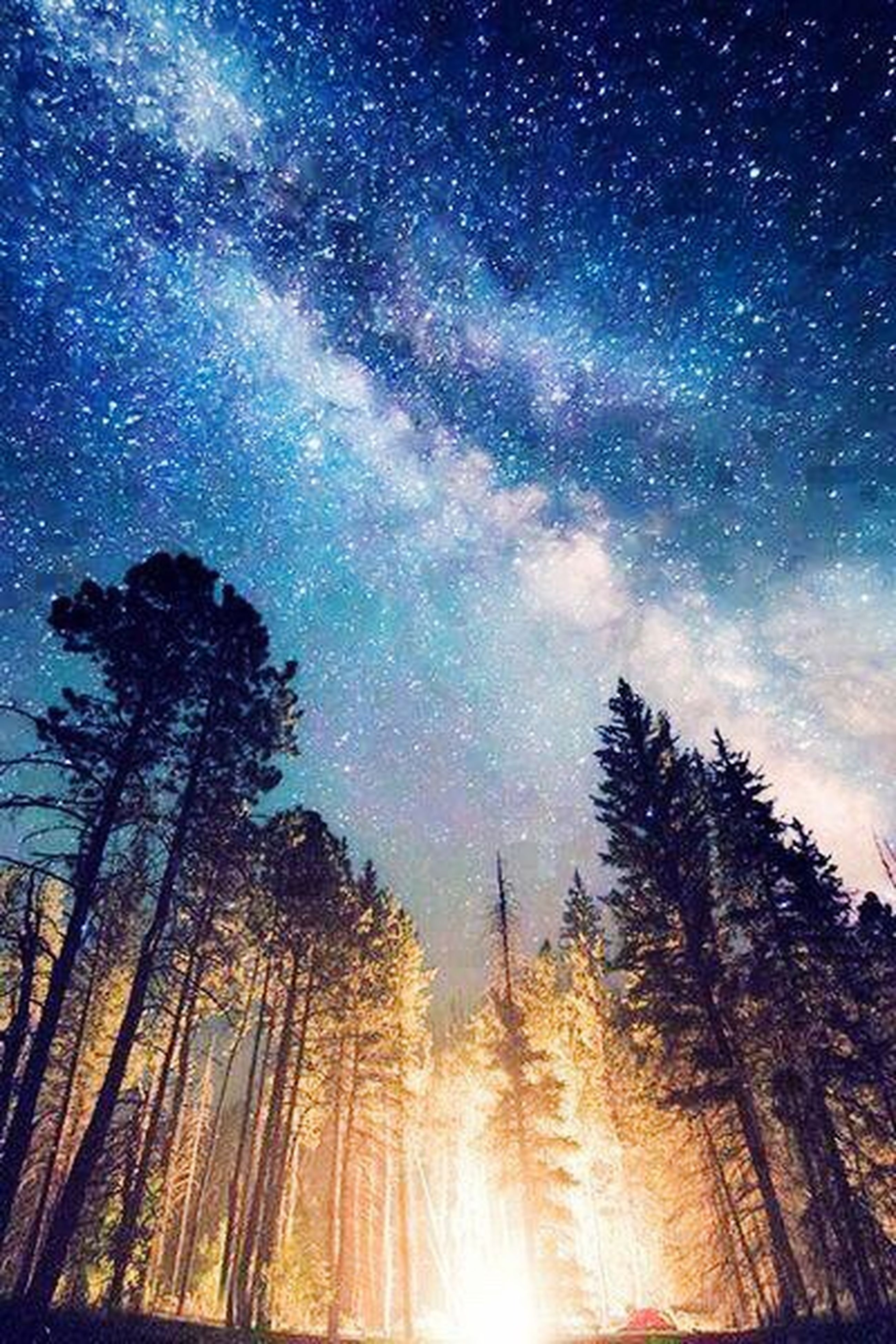 night, star - space, star field, tree, low angle view, scenics, sky, beauty in nature, astronomy, tranquility, tranquil scene, silhouette, nature, star, idyllic, galaxy, infinity, majestic, blue, milky way