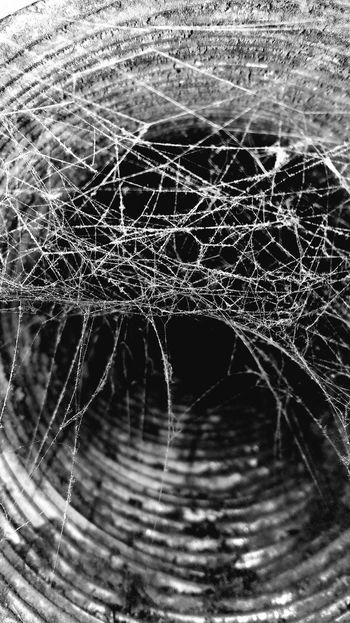 Close-up Web Spider Web Spiderweb Monochrome Blackandwhite Monochrome Photography Black And White Black & White Simple Minimalism