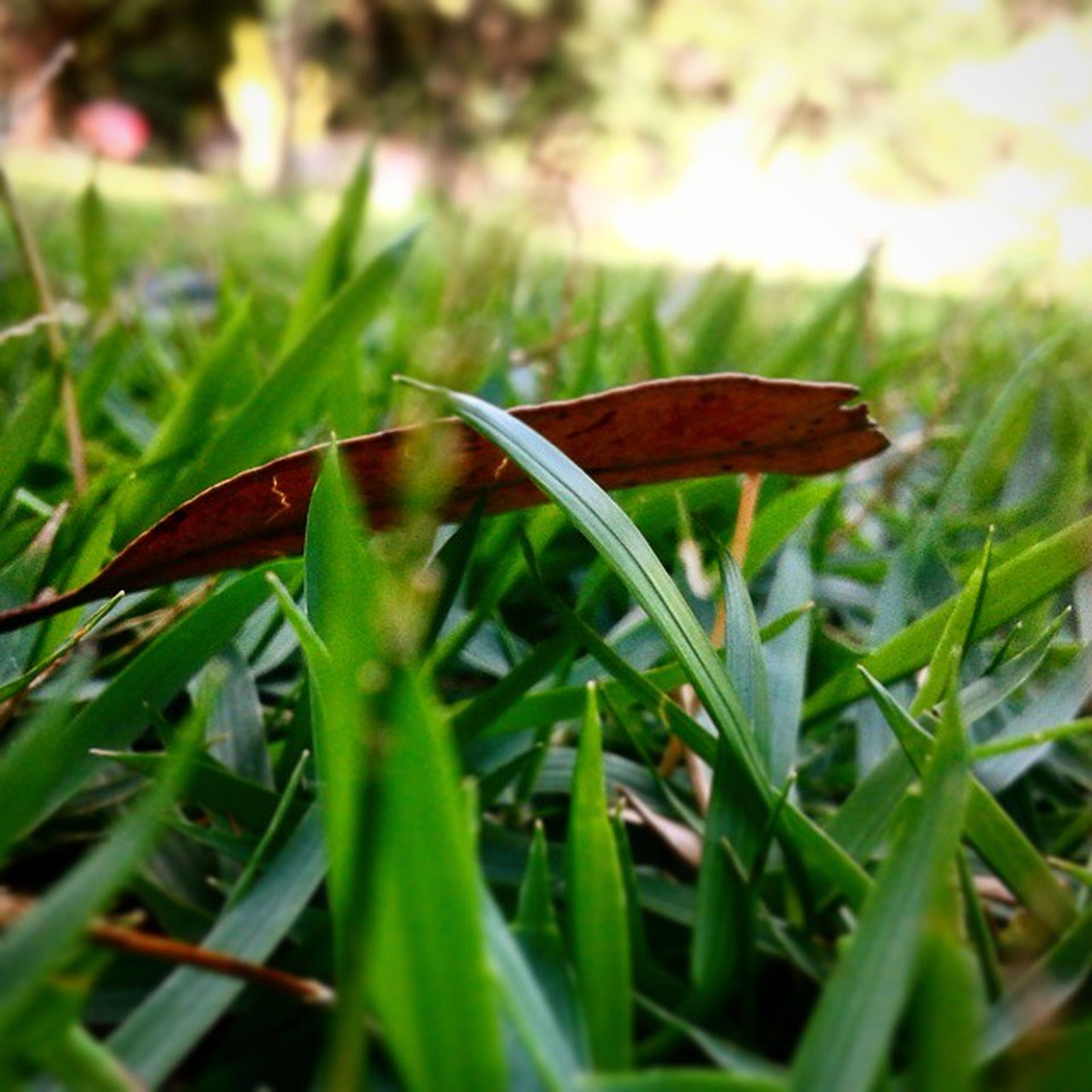 grass, growth, green color, plant, leaf, close-up, nature, field, selective focus, focus on foreground, beauty in nature, fragility, grassy, freshness, blade of grass, green, day, one animal, outdoors, insect