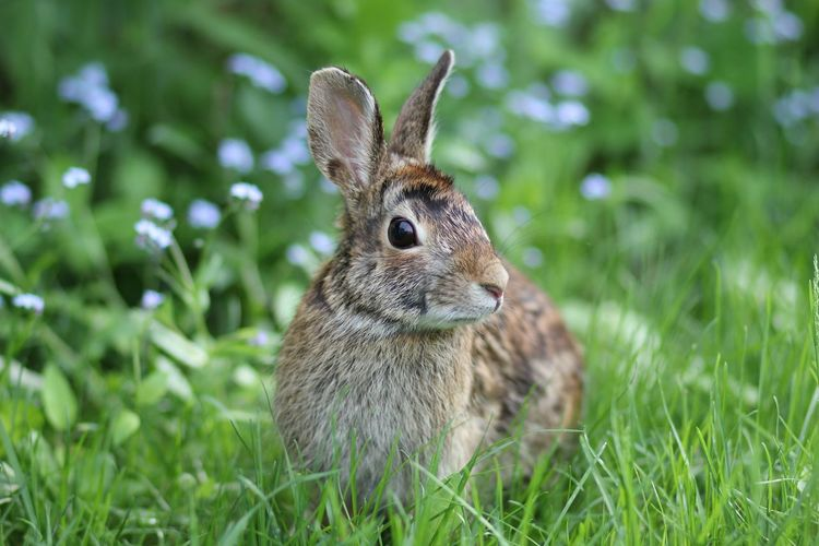 Took this picture from my backyard :) Hare Cute Animal Nature Green Fur Rabbit The Purist (no Edit, No Filter) Macro Beauty