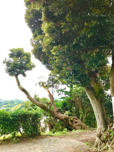 Tree Nature Growth Beauty In Nature Outdoors No People Landscape Green Color Breathing Space