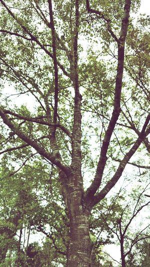 Nature Beauty In Nature EyeEmNewHere