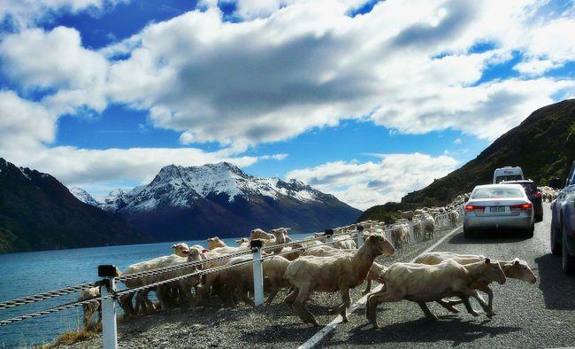 Cloud - Sky Cloudy Eye4photography  EyeEm Best Shots EyeEm Nature Lover Follow The Leader!! Mountain Mountain Range Mountain Side Sheep Sheep Crossing Walking In Line Showcase April