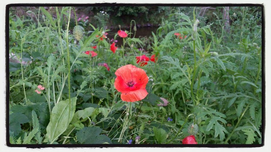 Summer Days In My Garden Taking Photos Flowers