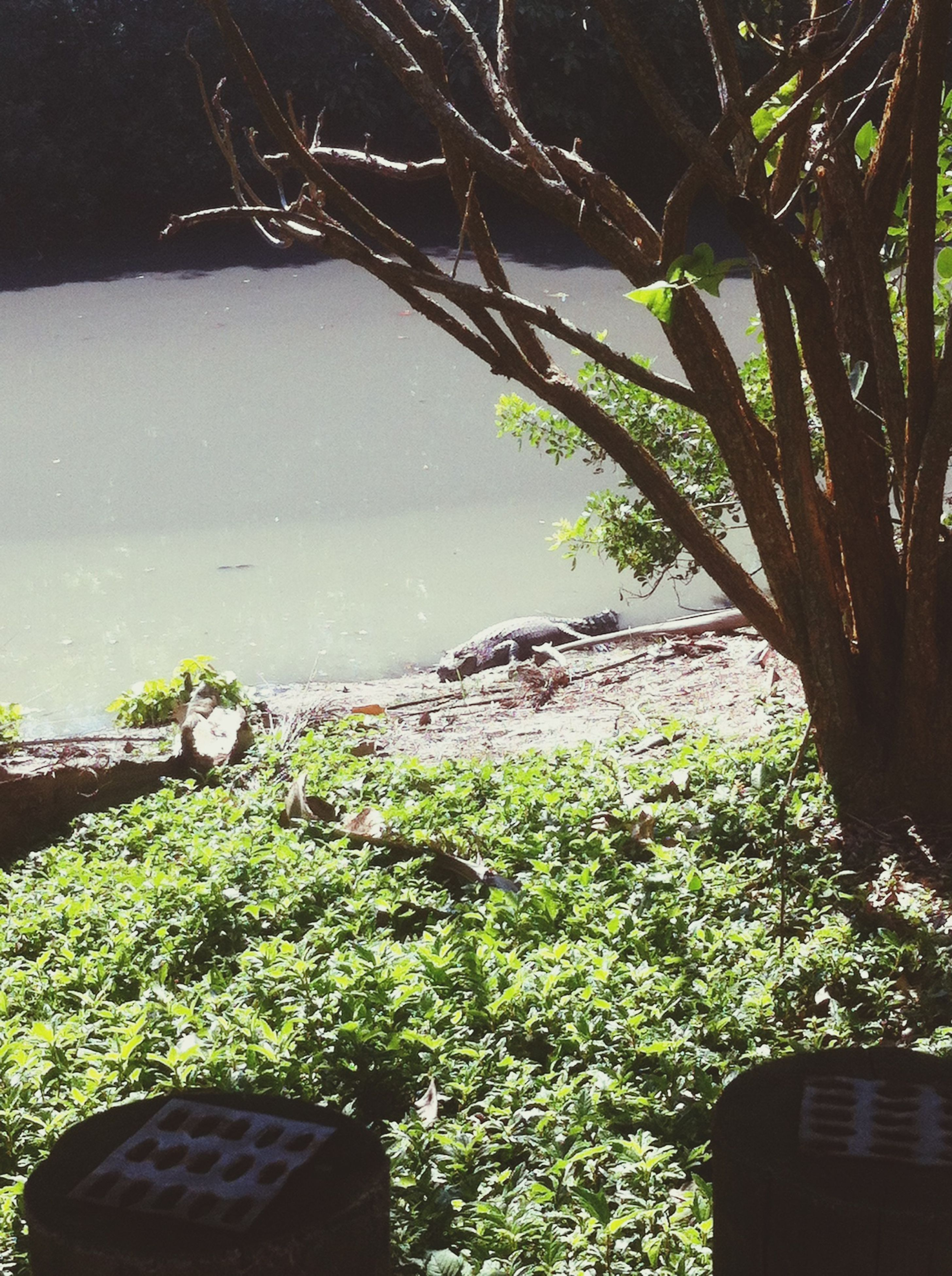 tree, growth, plant, nature, tranquility, water, green color, sea, tranquil scene, potted plant, sky, no people, day, beauty in nature, horizon over water, outdoors, scenics, leaf, branch, sunlight