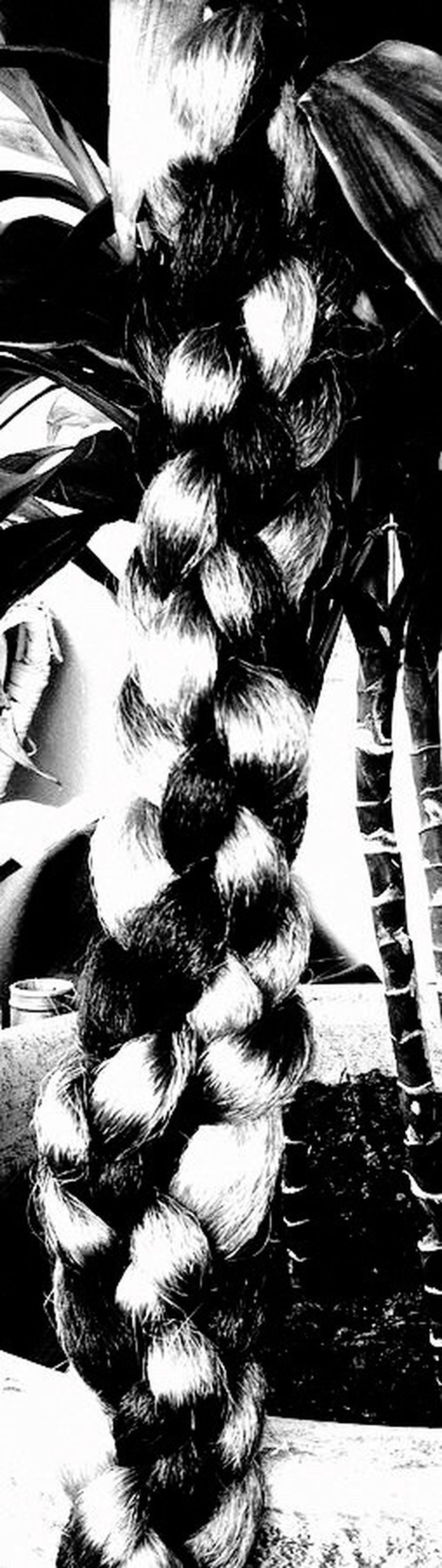 5 Strand Tropical Braid Fruit.. Close-up Blackandwhite Hair Braids Hairstyle Salon Avant-garde  Ponytail Hairstylist Hair Appointment. EyeEmNewHere Fine Art Photography