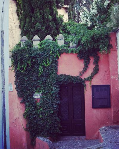 Escondite Hiding Place in Granada SPAIN Old Parts Climbers Towers Doors Pink Wall Hidden Away Down The Street Ivy Pentax