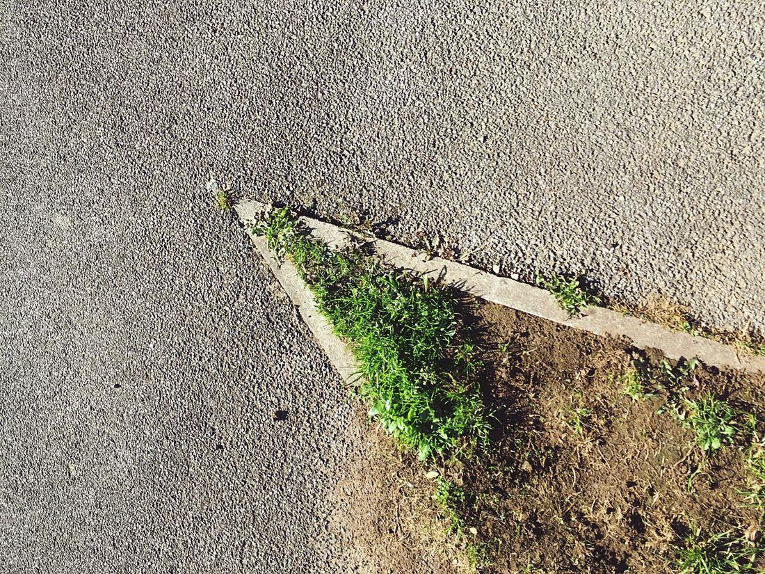 g r a s s Grass Pavement Urban Geometric Shape