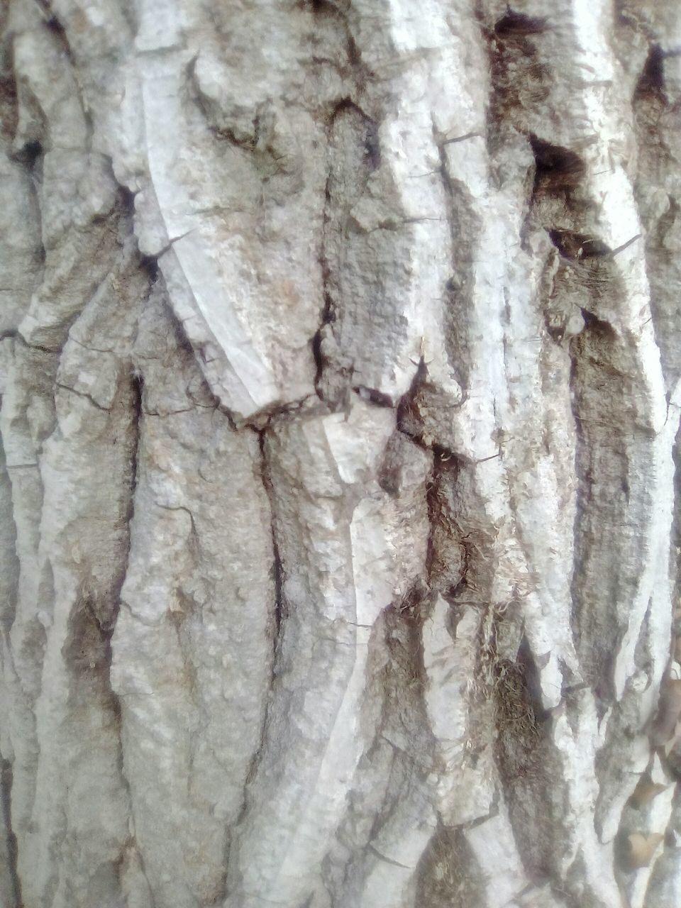 textured, backgrounds, full frame, tree trunk, no people, pattern, marble, nature, outdoors, day, close-up, tree, beauty in nature