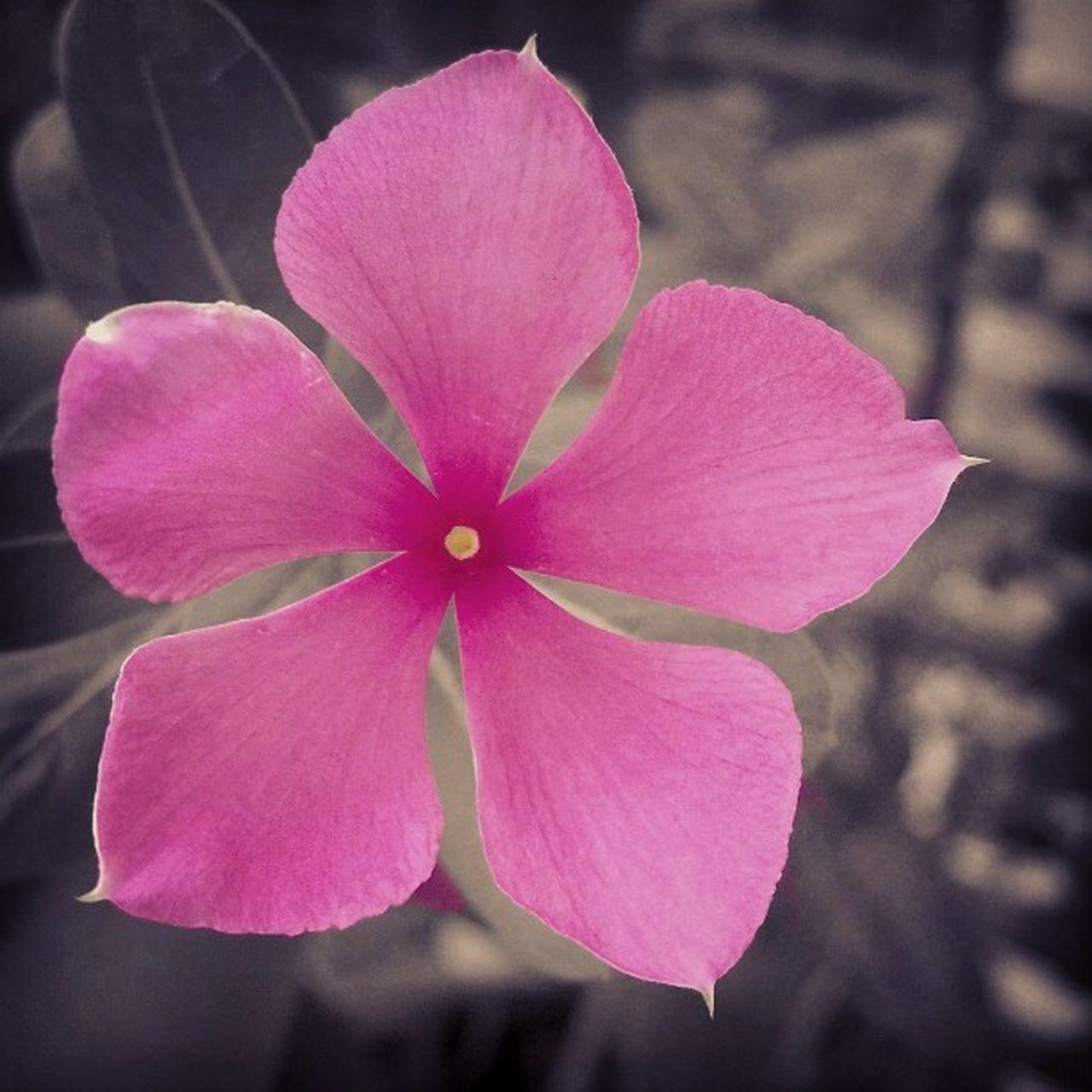 Basicflower Looks_cool Colorpop Nokia_camera Lumia920 Nokia_creative_studio