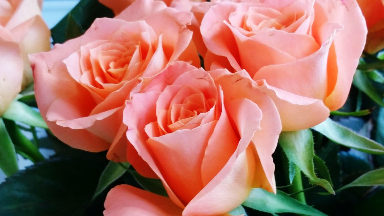 Bouquet Flower Roza Rose - Flower Rose🌹 Flowers Rosé Nature Freshness Kwiaty Nature