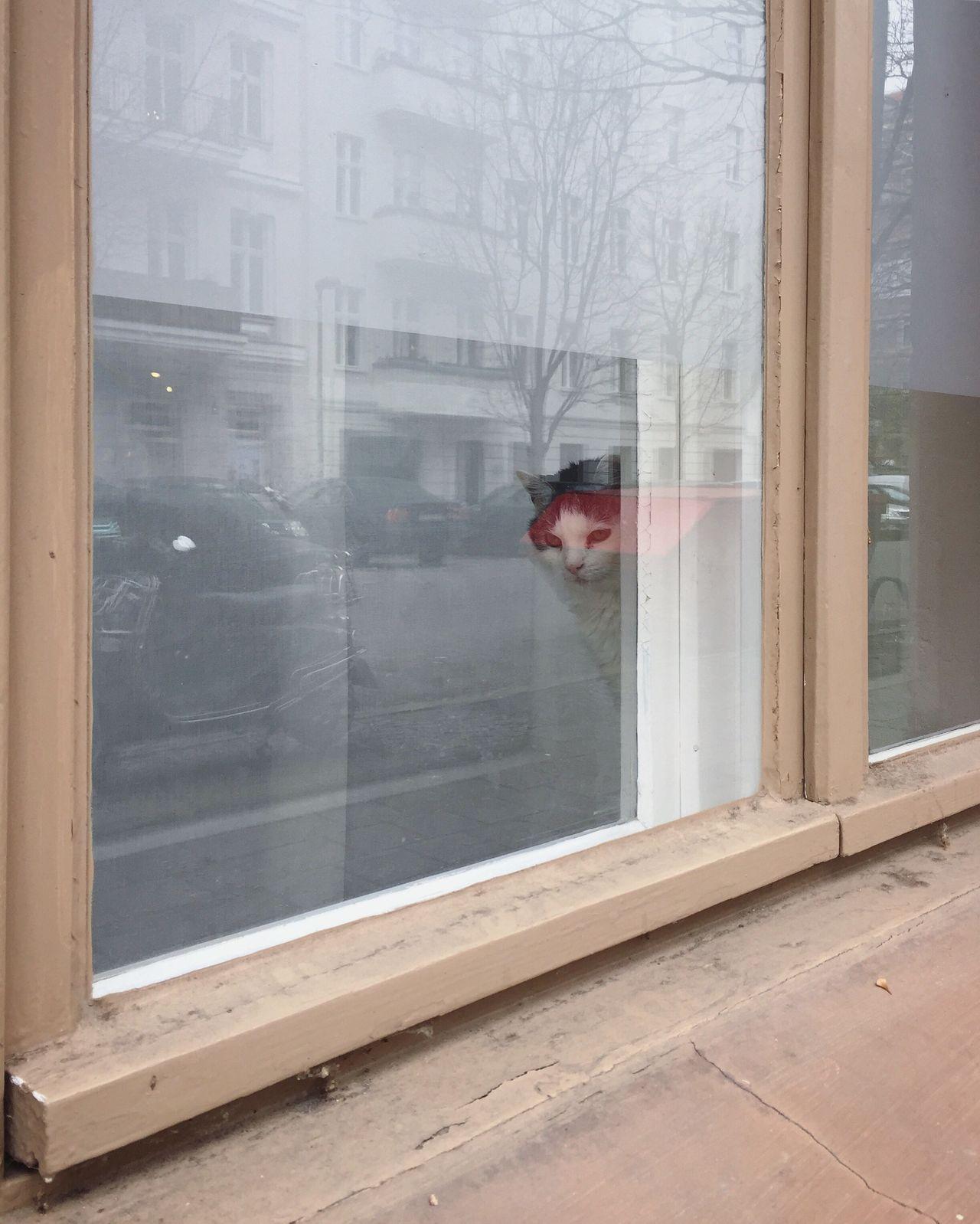 Berlin cats Window Building Exterior Rain Day Built Structure Real People Architecture Rainy Season Indoors  Sliding Door Cat Berlin Prenzlauerberg Sleepy Cute