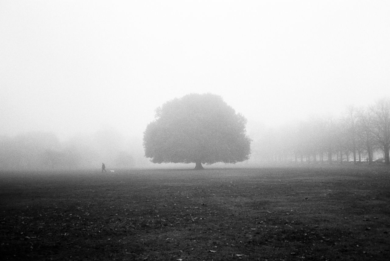 fog, landscape, foggy, field, tree, nature, mist, tranquil scene, tranquility, hazy, beauty in nature, outdoors, idyllic, scenics, day, grass, agriculture, plough, one person, sky, people
