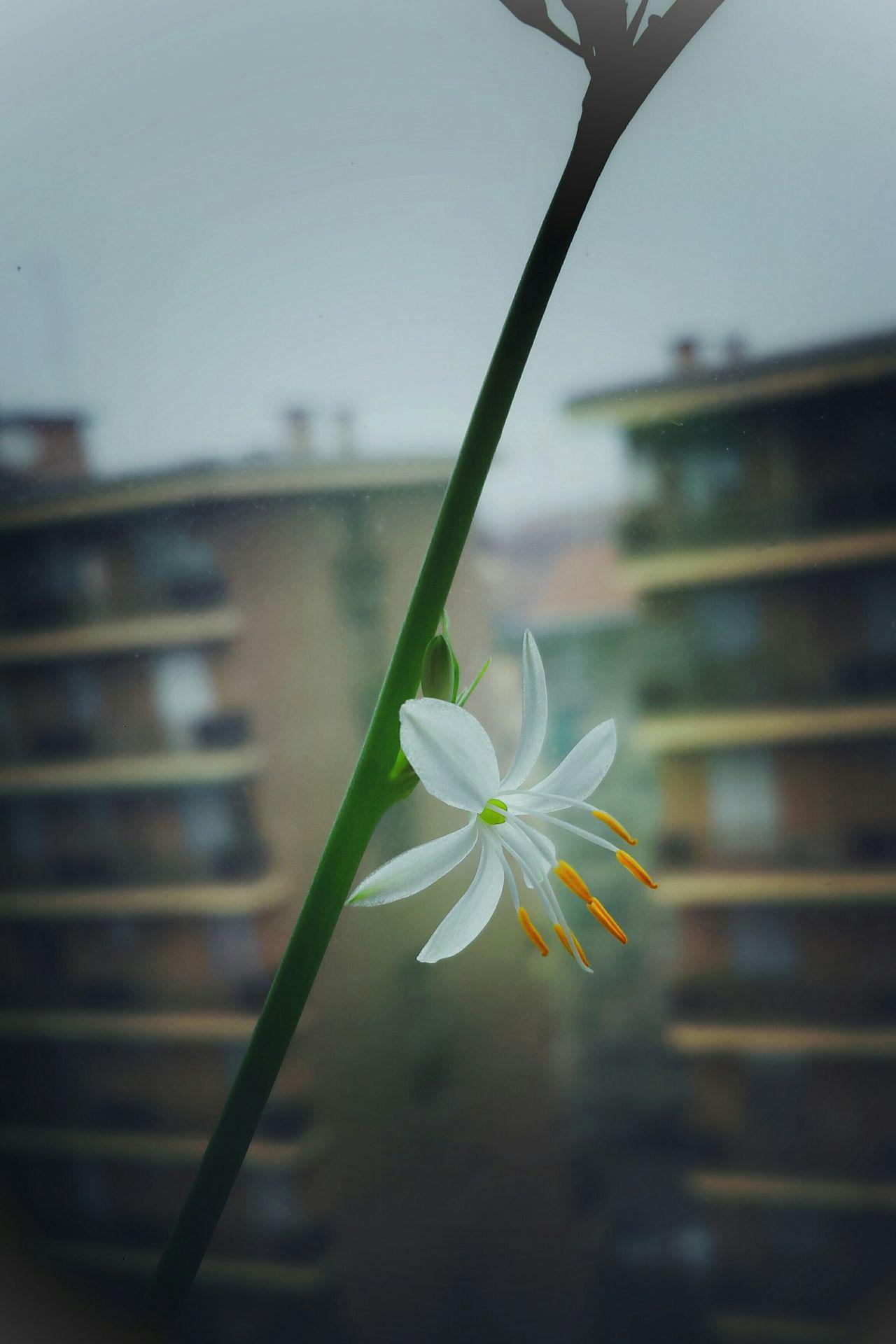 Winter Flowers Winter Blooms Fiorire d'inverno