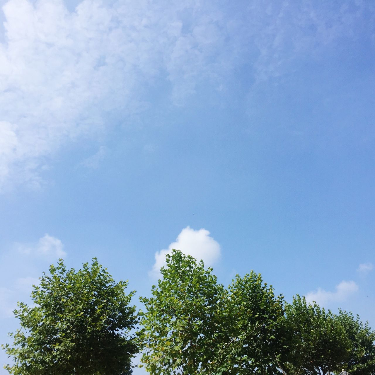 tree, low angle view, sky, nature, beauty in nature, day, cloud - sky, growth, no people, outdoors, scenics, tranquility, blue