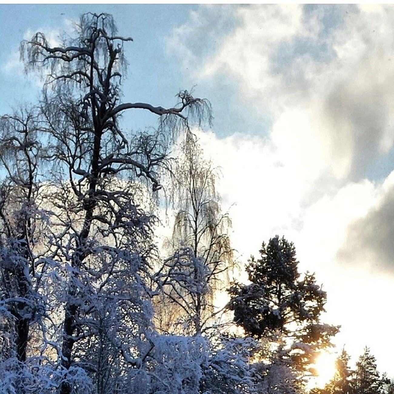 Dalarna Hjortnäs Träd Himmel