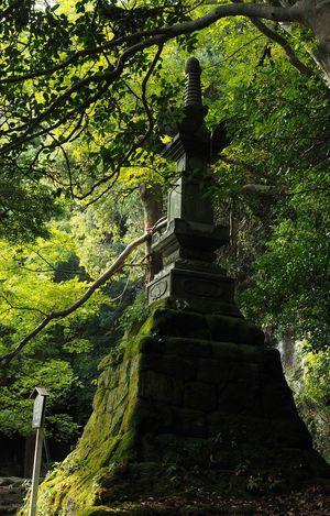コレなんだかよくわからないけど、まわりの苔や緑が綺麗で落ち着けた空間でした。 Photography Nokogiriyama 鋸山 Nature Photography Beautiful Nature Moss Mossporn Greenery Monument