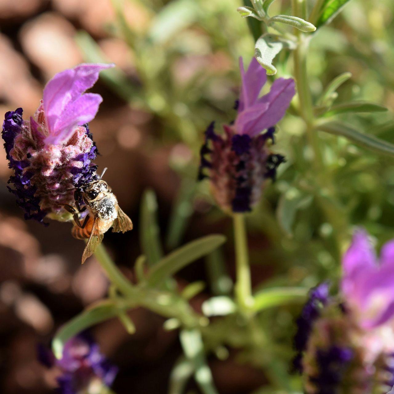 Bee-havior 2 Bees And Flowers Purple Nature Close-up HoneyBee Bee 🐝 First Eyeem Photo Blooming Love To Take Photos ❤ Love