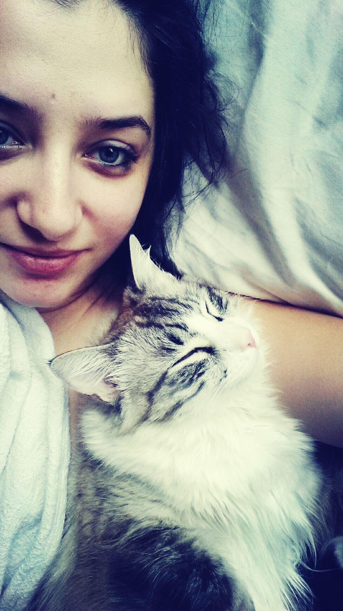 Sleepy Cat Saturday Morning Siamese Dreams My Feline Friends