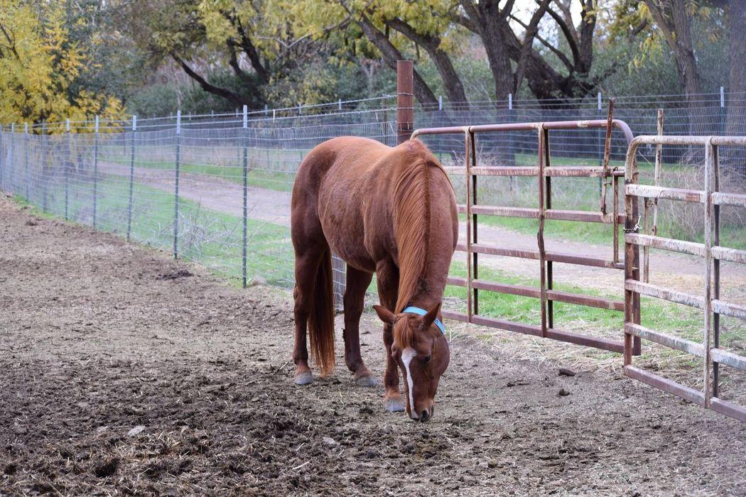 Horse in Davis , California