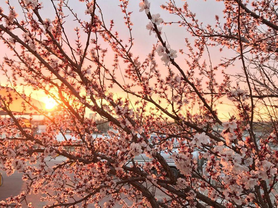 Mevsim bahar olunca yaşamak ne güzel :) EyeEm EyeEm Gallery Gununkaresi Bahar Bahar çiçekleri