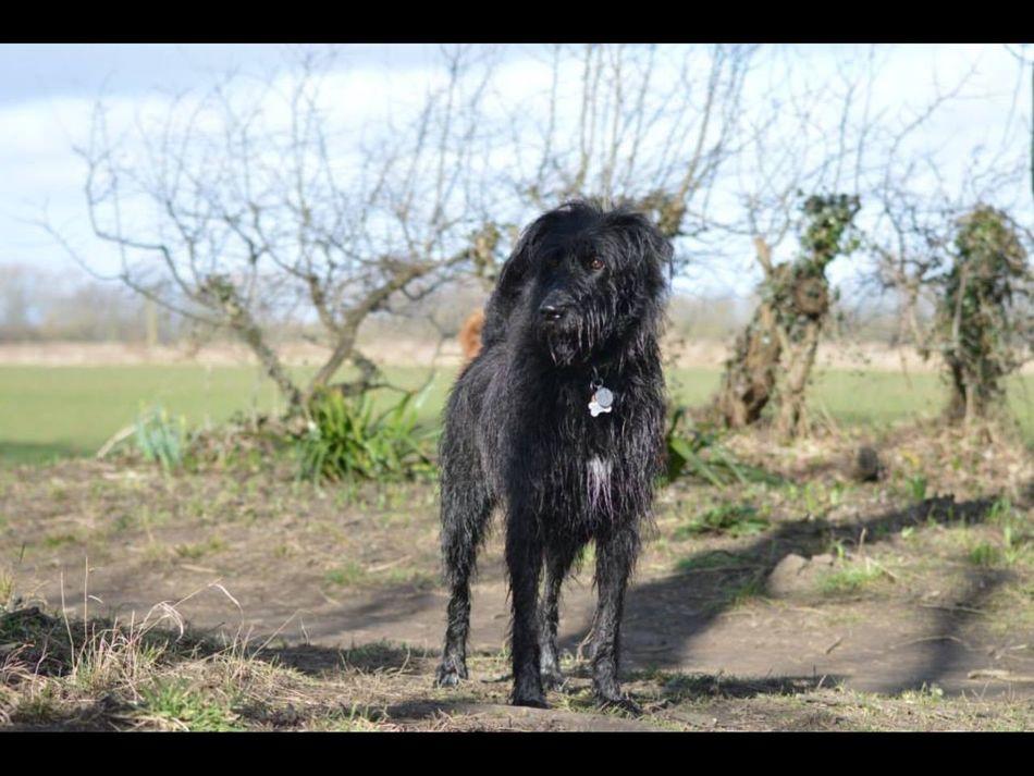 My best friend Wilbert Dogs